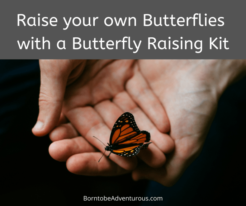Butterfly Raising Kit