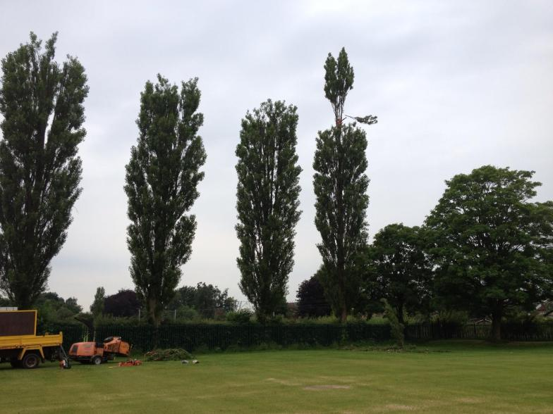 Tree crown reduction Cheadle Hulme