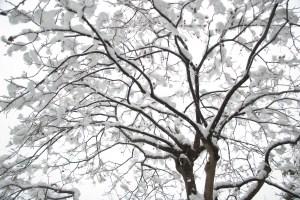 Tree in Snowy Winter