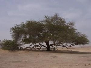 Lone tree in sany plain