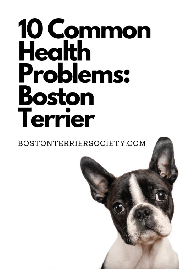 10 Common Boston Terrier Health Problems. Boston Terrier Society.