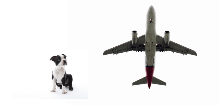Complete Guide to Air Travel with your Boston Terrier. Boston Terrier Society.
