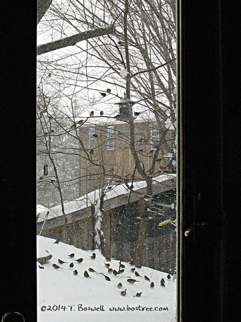 IMG_2868 Birds Bostree_Studio Kiln_Shed 3