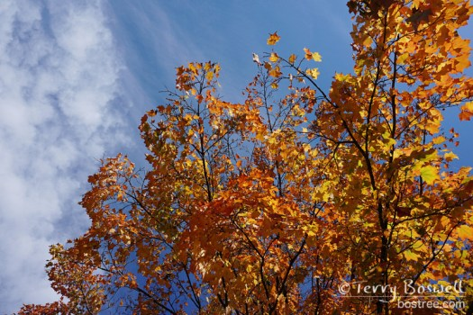 DSC04972-2-color-of-fall-terry-boswell-wm