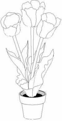 Colorea Tus Dibujos Dibujo De Flor Tipo Cartucho Para