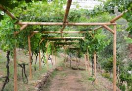 Βοτανικό Πάρκο- Κήποι Κρήτης: Αμπελώνες