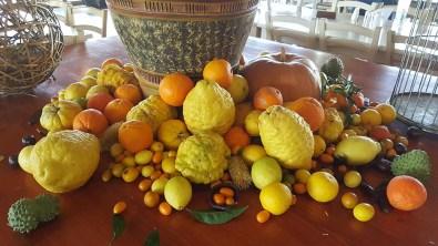 Βοτανικό Πάρκο και Κήποι Κρήτης- Εσπεριδοειδή Φρούτα του κήπου μας