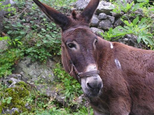Botanical Park-Gardens of Crete- Our Animal Farm- Donkey