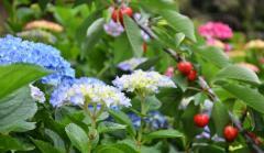 Botanical Park-Gardens of Crete- Fruit Blossoms