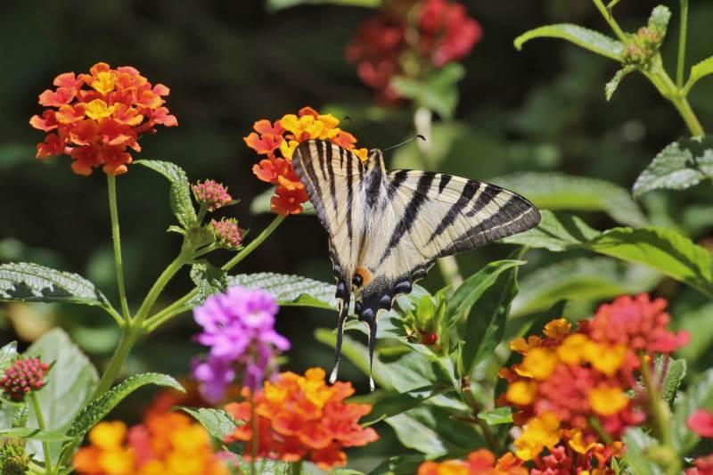 Botanical Park- Gardens of Crete- Butterflies