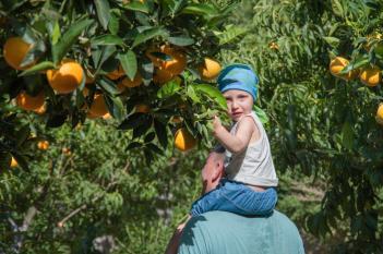 Botanical Park- Gardens of Crete: A walk through our orange trees garden