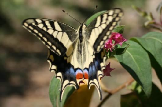 Botanical Park- Gardens Of Crete: Butterflies