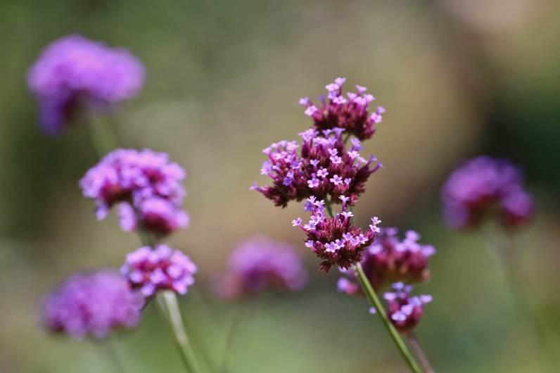 Botanical Park- Gardens Of Crete: Blossoms