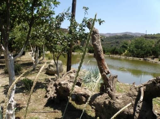 Βοτανικό Πάρκο και Κήποι Κρήτης: Λίμνη και κήπος εσπεριδοειδών