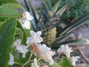 Τροπικά Δέντρα και φυτά - Βοτανικό Πάρκο και Κήποι Κρήτης: Άνθη Λουλουδιών