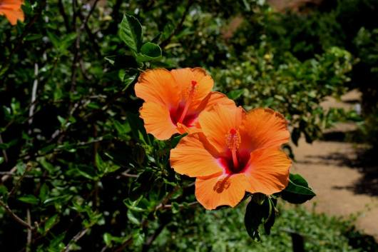 Botanical Park and Gardens Of Crete- Colourful Stamens