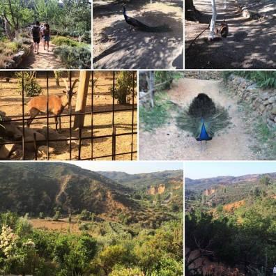 Botanical Park and Gardens Of Crete- Our small animal farm: Chania, Skordalou