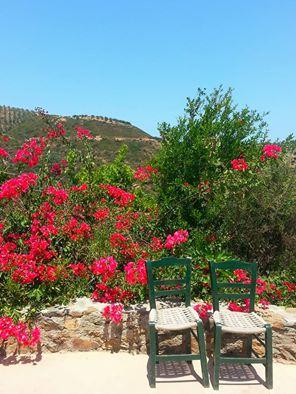 Botanical Park and Gardens Of Crete-  Colourful bucamviglia