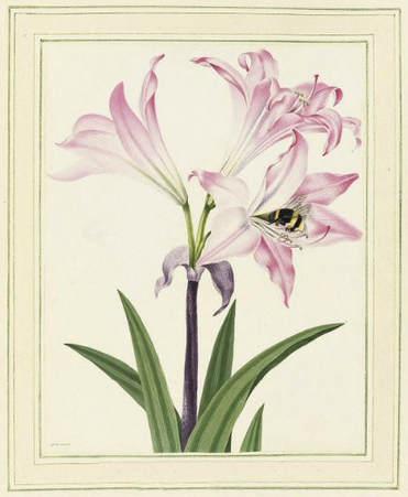 famous botanical artists botanical