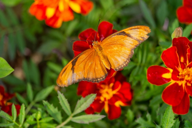 butterfly-house_gallery1.jpg