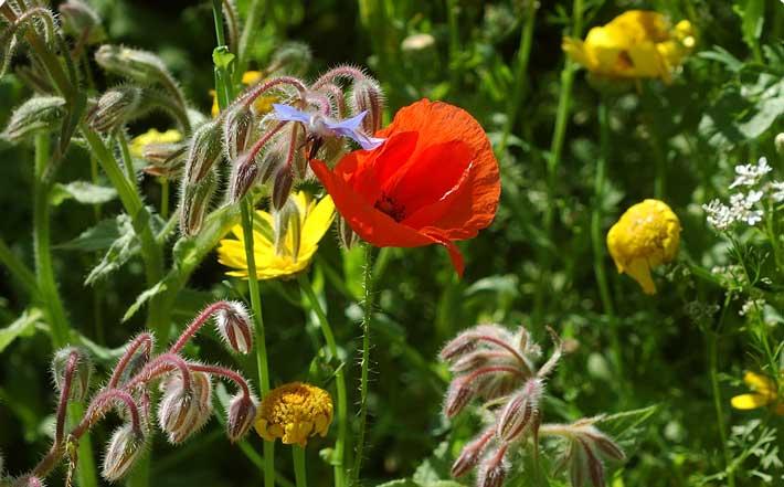 Botanischer Sommerkurs