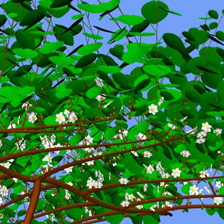A functional–structural kiwifruit vine model