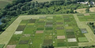 Plant diversity and functional trait variation
