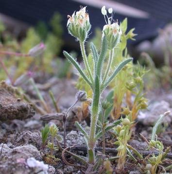 Soil seed bank recovery in semi-arid vegetation