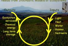 Modelling Of Ecosystems: the Cycle, Inputs and Ouputs