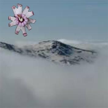 Gene flow in mountain environments