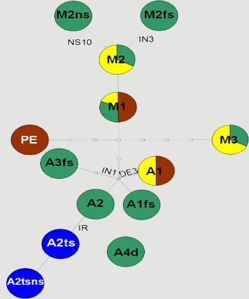 Origins of determinate growth habit in Phaseolus