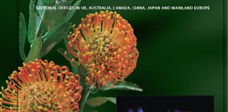 Leucospermum flowers in the family Proteaceae on the cover of Annals of Botany