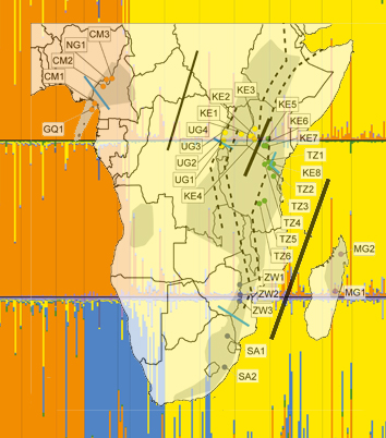 Biogeography of Prunus africana in Afromontane forests