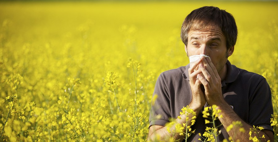 Man sneezing in a canola/oil seed rape field.