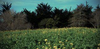 USC Agroecology Center