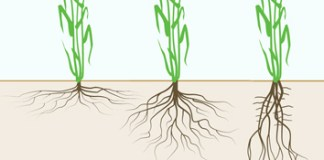 Matching roots to their environment