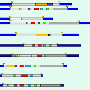Repetitive component of the peanut A genome