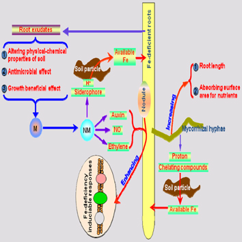 Microbes improve plant iron acquisition (Review)