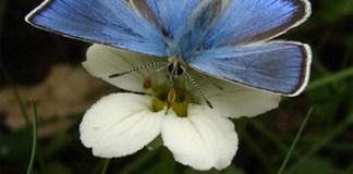Movement herkogamy versus pollination accuracy