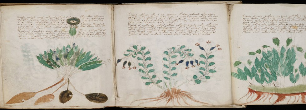Image: From the 'Voynich manuscript'.