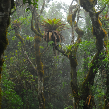 Hydrometeorology and ecophysiology of cloud forests (Invited Review)