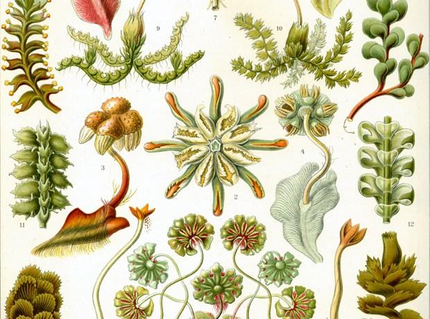 many mosses