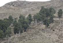 Rain as a trigger for xylogenesis in Juniperus