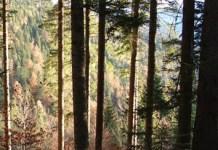 Tree root density model for heterogeneous forest ecosystems