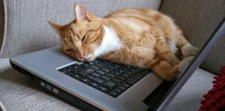 BloggingFatigue