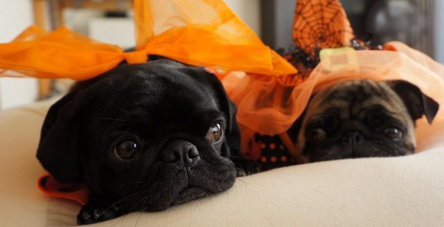 Puppy Hallowe'en