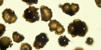 Three types of spores detected in the experimental plant E_KUR.