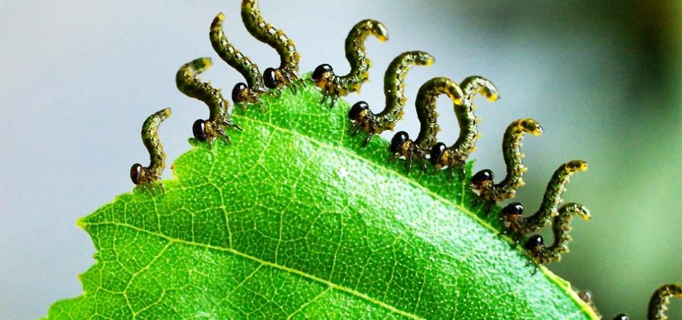 Herbivores on a leaf