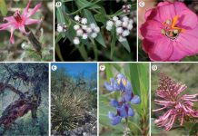 Plant species and habitats surveyed in the Sacred Valley