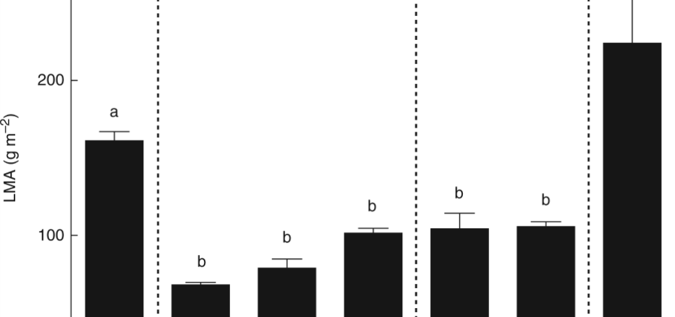 Leaf mass per area (LMA) of the species in the study